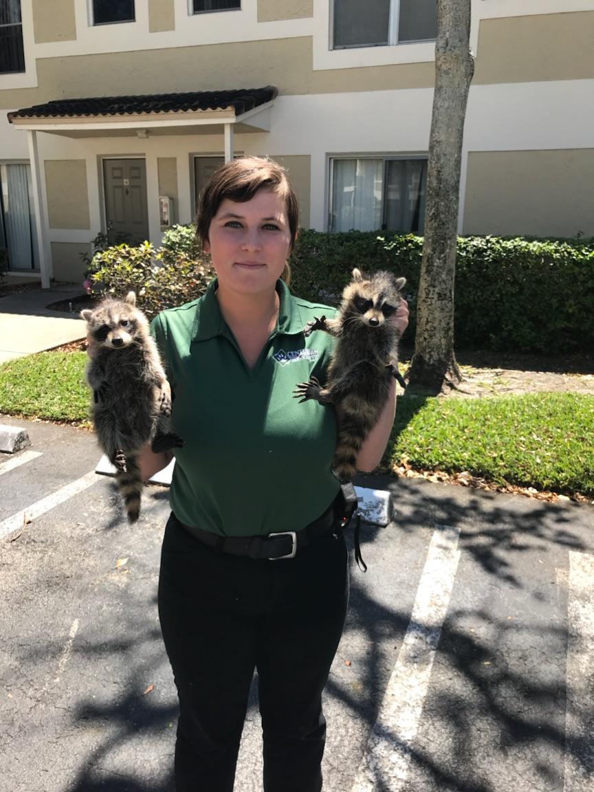 Jacksonville, FL Wildlife Control